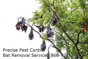 New Jersey Bat Removal