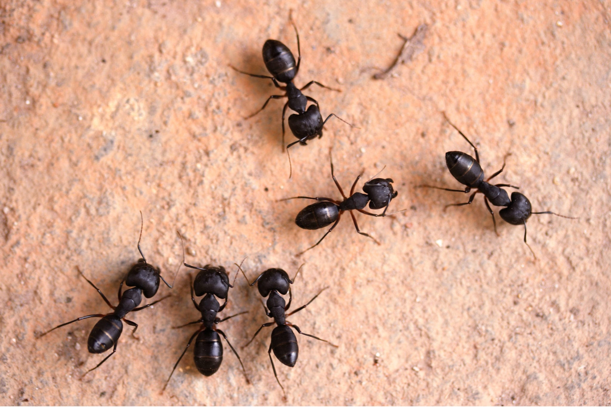 How To Get Rid Of Tiny Black Ants In My Kitchen | How To
