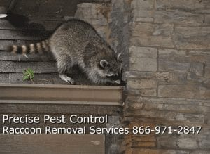 bergen-county-raccoon-removal