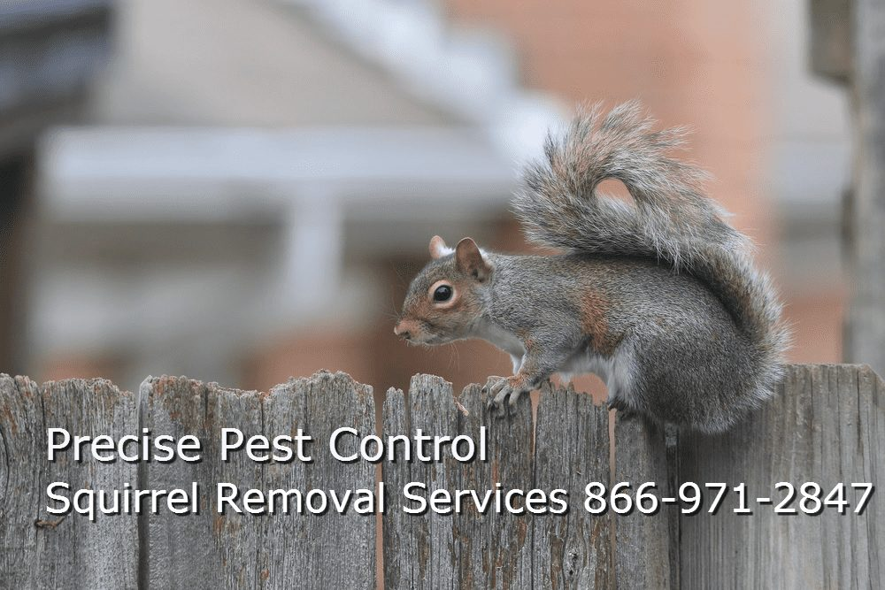 Bergen County Squirrel Removal New Jersey Pest Control Service