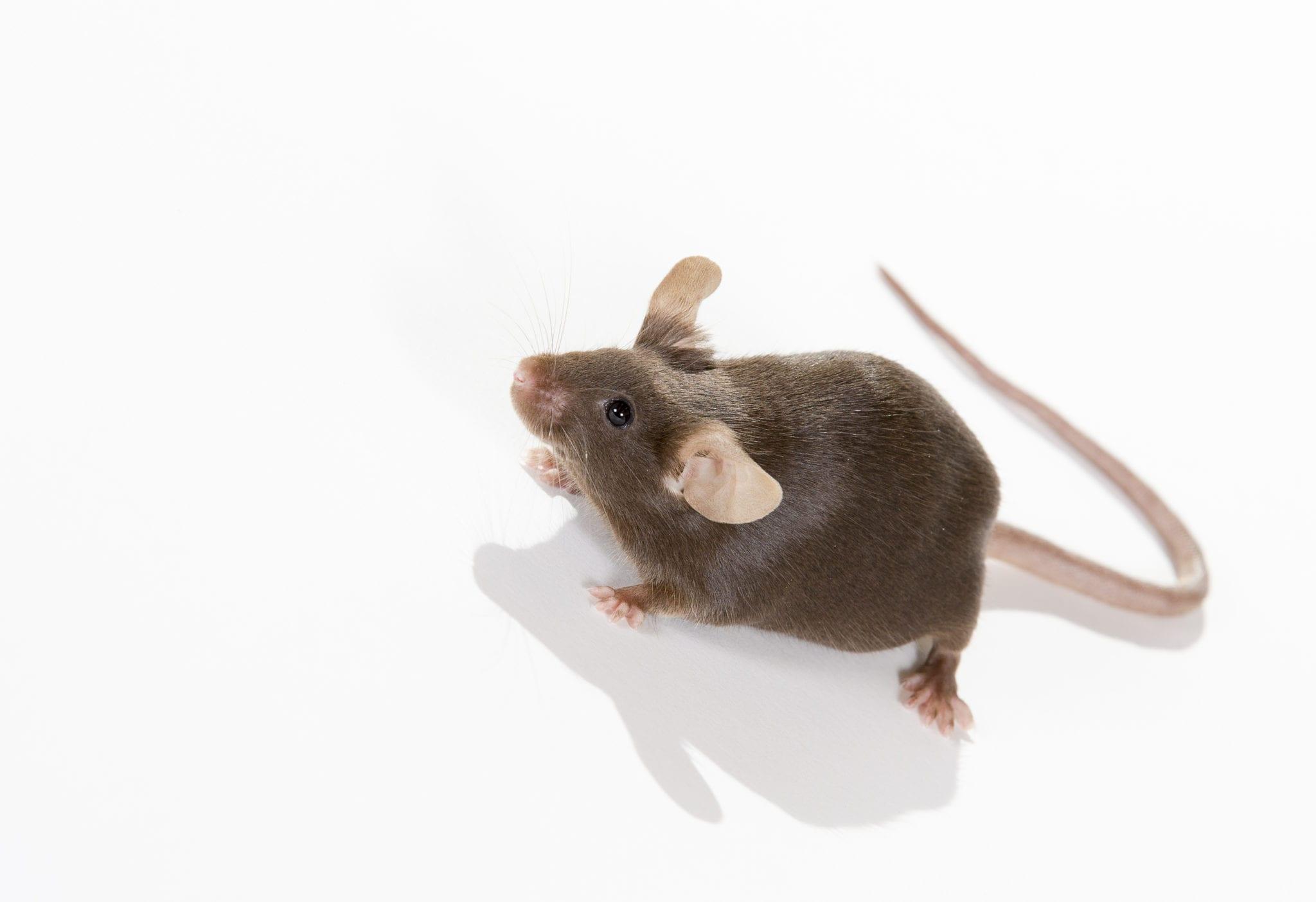 nj-mice-removal