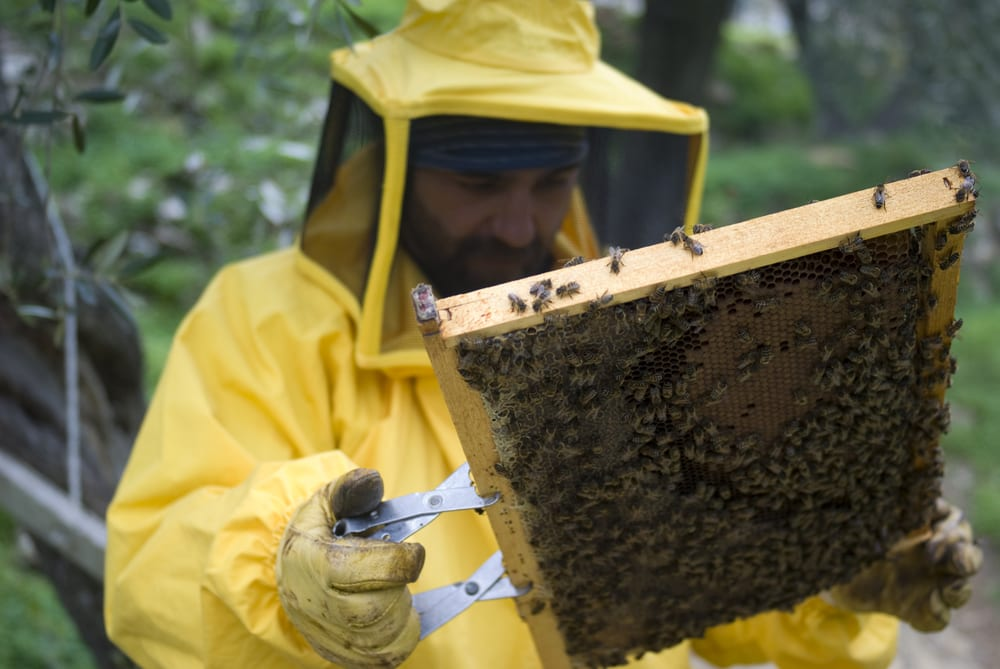 bee removal passaic county